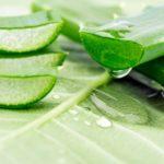 7 bonnes raisons d'utiliser l'Aloe Vera